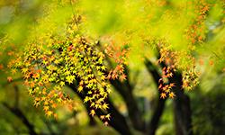 Autumn Veil